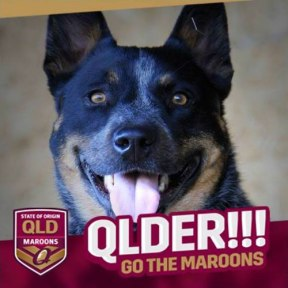 Jeda today - she's a SA dog, but Mum & Dad are Queenslanders!!