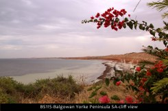 BS115-Balgowan-Yorke-Peninsula-SA-cliff-view