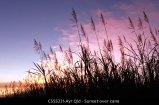 CSSS221-Ayr-Qld