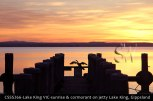 CSSS266-Lake-King-VIC-sunrise-&-cormorant-on-jetty-Lake-King-Gippsland