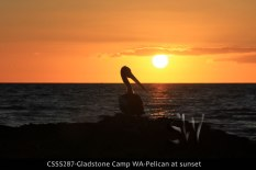 CSSS287-Gladstone-Camp-WA-Pelican-at-sunset