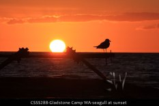 CSSS288-Gladstone-Camp-WA-seagull-at-sunset
