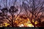 CSSS290-Kweda-Bulyee-WA-wheatbelt-silhouettes-at-sunrise