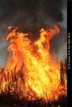 F113-Cane-Fire-Ayr-Qld-No2