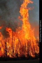 F123-Cane-Fire-Ayr-Qld-No3