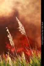 F127-Cane-Fire-Ayr-Qld-No4