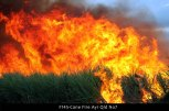 F145-Cane-Fire-Ayr-Qld-No7