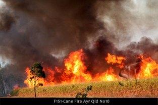 F151-Cane-Fire-Ayr-Qld-No10