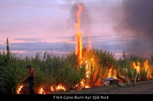 F164-Cane-Burn-Ayr-Qld-No4