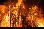 F171-Cane-Burn-Ayr-Qld-No5