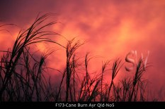 F173-Cane-Burn-Ayr-Qld-No5