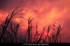 F173-Cane-Burn-Ayr-Qld-No5