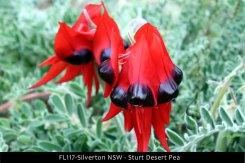 FL117-Silverton-NSW