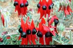 FL119-Silverton-NSW