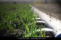 FL126-Giru-Qld-watering-new-cane