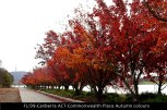 FL139-Canberra-ACT-Commonwealth-Place-Autumn -colour