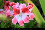 fl203-mt-barker-wa-summer-blooms