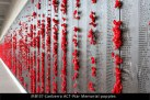 MB137-Canberra-ACT-War-Memorial-poppies