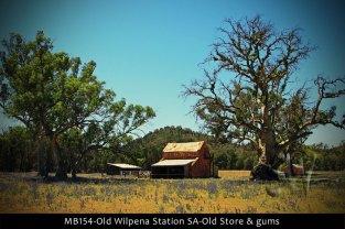 MB154-Old-Wilpena-Station-SA-Old-Store-&-gums