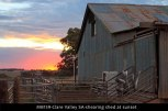 MB159-Clare-Valley-SA-shearing-shed-at-sunset
