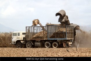 MM132-Ayr-Qld-harvest