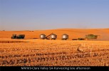 MM169-Clare-Valley-SA-Harvesting-late-afternoon