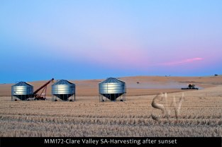 MM172-Clare-Valley-SA-Harvesting-after-sunset
