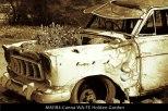MM184-Canna-WA-FE-Holden-Garden