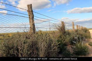 OB107-Mungo-NP-NSW
