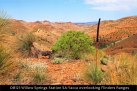 OB121-Willow-Springs-Station-SA-Yacca-overlooking-Flinders-Ranges