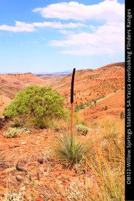 OB122-Willow-Springs-Station-SA-Yacca-overlooking-Flinders-Ranges