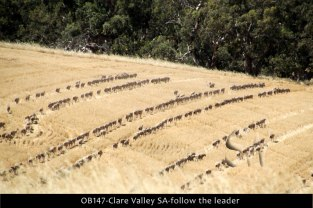OB147-Clare-Valley-SA-follow-the-leader