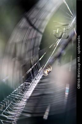 OB165-Metricup-WA-spiderweb