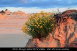 RS147-Mungo-National-Park-NSW