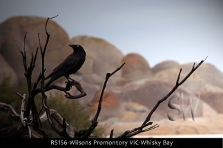RS156-Wilsons-Promontory-VIC-Whisky-Bay