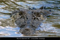 WL112-Darwin-NT-crocodile