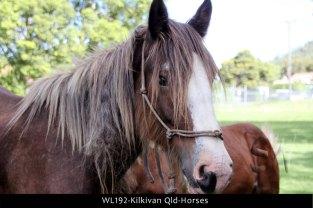 WL192-Kilkivan-Qld-Horses