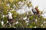 WL195-Ayr-Qld-Sea-Hawks