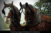 WL230-Sovereign-Hill-Ballarat-VIC-Cobb-&-Co