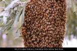 WL271-Lake-Indoon,-Eneabba-native-bee-hive