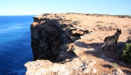 Nullarbor Cliffs