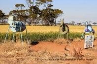 Tin-Horse-Highway,-Kulin-WA-Australian-Defence-Horses