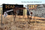 Tin-Horse-Highway,-Kulin-WA-Dead-Cert