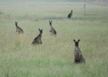 Some of the locals