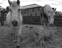 Hay!! I love hay!!