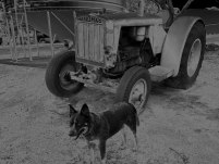 An old tractor & Jeda