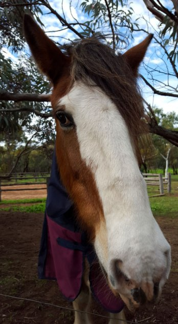 Clydesdale-Avondale Discovery Farm