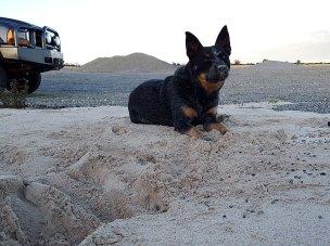 Jeda enjoying a gravel pit