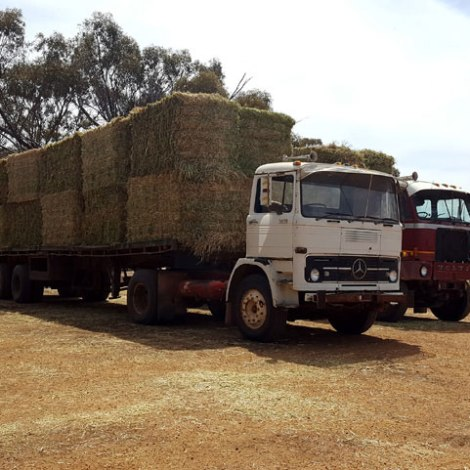 Hay ready for unloading at shed
