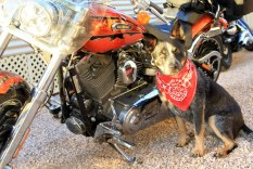 Jeda getting her 'Harley Dog' on!!